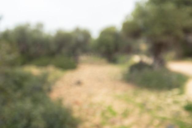 Bokeh verde natural de luz solar brilhante, borrão abstrato