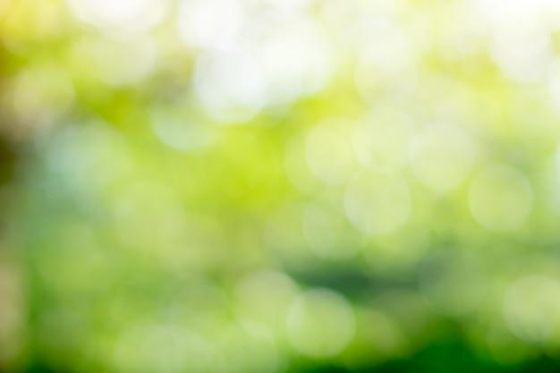 Bokeh verde no resumo da natureza desfocar o bokeh verde de fundo da árvore