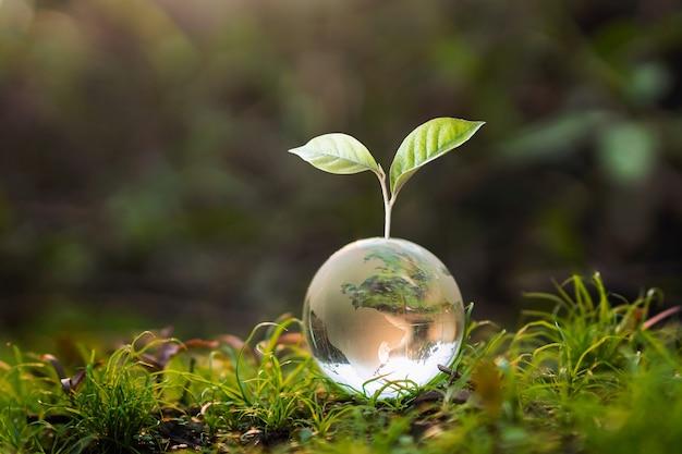 Bola de globo de vidro com árvore crescente e fundo de borrão de natureza verde.