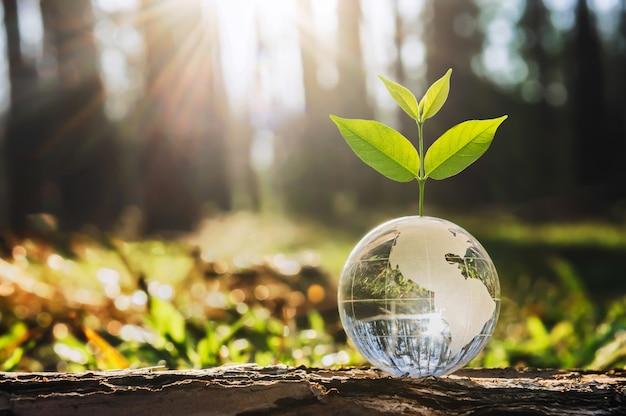 Bola de globo de vidro com crescimento de árvores e natureza verde. conceito do dia da terra eco