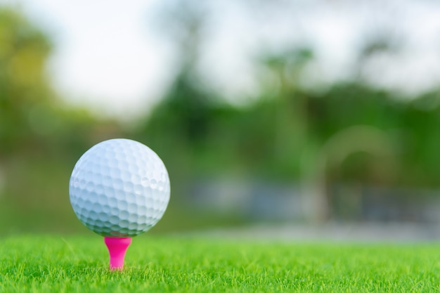 Bola de golfe com tee-de-rosa na grama verde pronto para jogar no campo de golfe