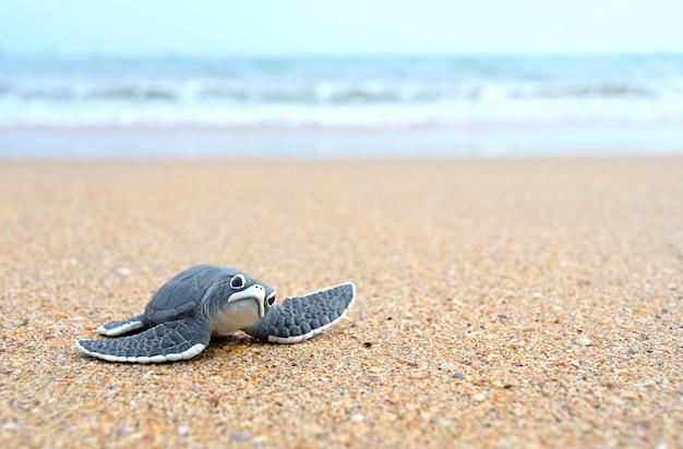 Bolas de tartaruga na praia