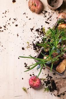 Bolbos de flores de jardim e brotos