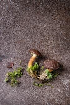 Boleto de cogumelos poloneses