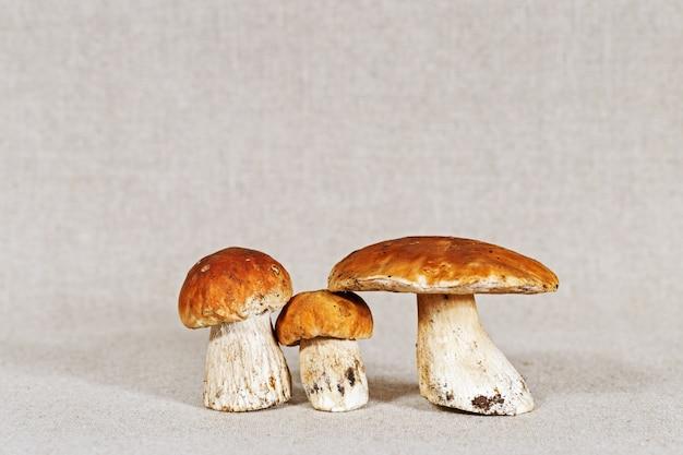 Boleto de três cogumelos frescos perto com espaço da cópia