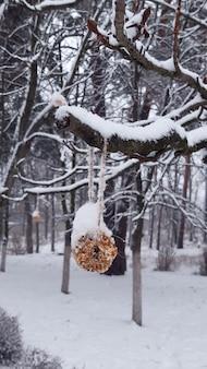Bolo de feading para pássaros com sementes, nozes no inverno