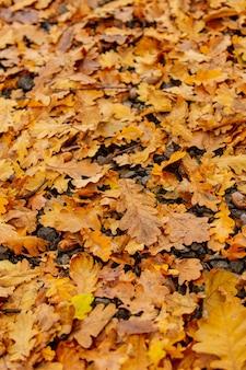 Bolotas de carvalho e folhas no chão
