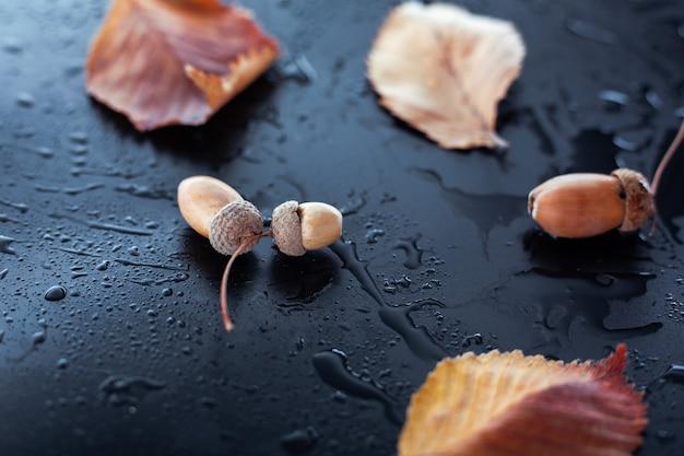 Bolotas e folhas em um fundo molhado