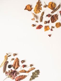 Bolotas e várias sementes e folhas de árvores selvagens, isoladas no branco