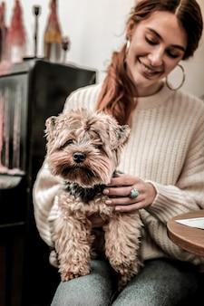 Bom terrier. cachorro pequeno sentado nas mãos de sua dona