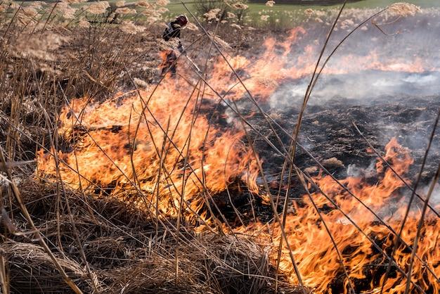 Bombeiro apaga fogo nos juncos. bombeiros em ação.
