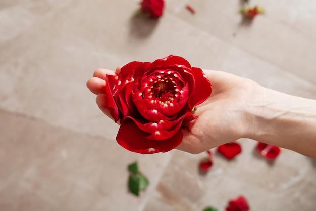 Bonito e natural. close-up de lindas mãos femininas segurando flor