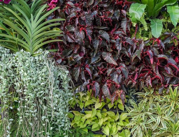 Bonito, foliage, parede jardim