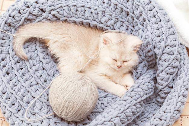 Bonito gatinho britânico prateado dorme sobre um cobertor de malha azul com um novelo de linha. conforto do lar.