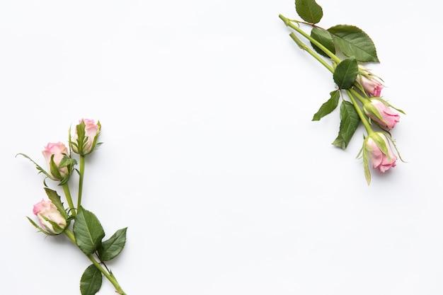 Bonitos galhos de rosas