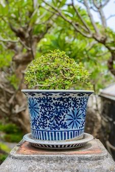 Bonsai, arbusto áspero siamês nas panelas de porcelana