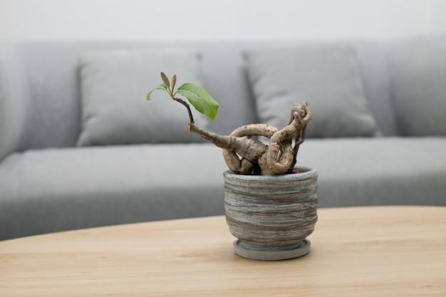 Bonsai em cinza em vaso sobre uma mesa de madeira