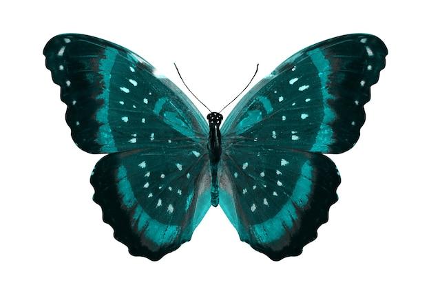 Borboleta azul. inseto natural. isolado em fundo branco