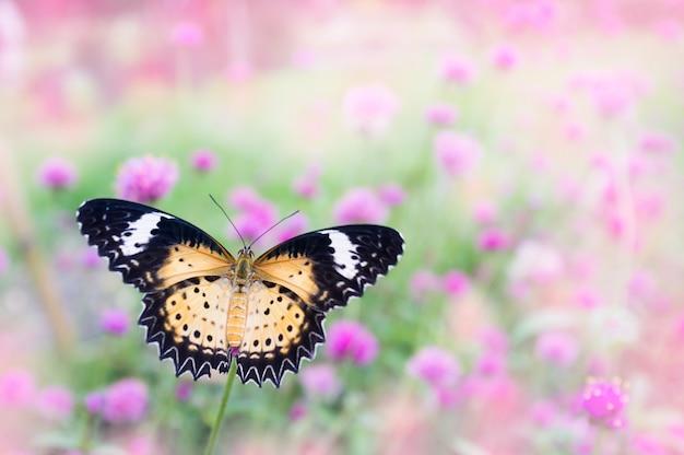 Borboleta coleta néctar de flores rosa-púrpura no jardim