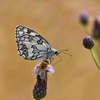 Borboleta colorida bonita que senta-se na flor na natureza. dia de verão com sol lá fora no prado. col
