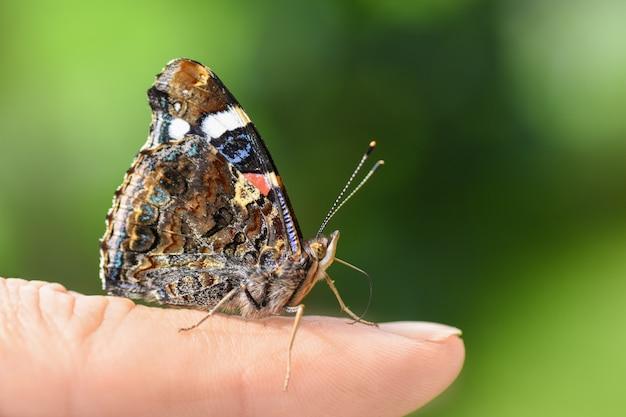 Borboleta colorida brilhante nas asas em um dedo humano sobre um fundo verde