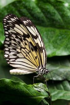 Borboleta colorida pálida com fundo de folhagem