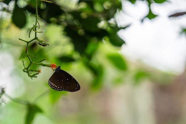 Borboleta colorida tropical