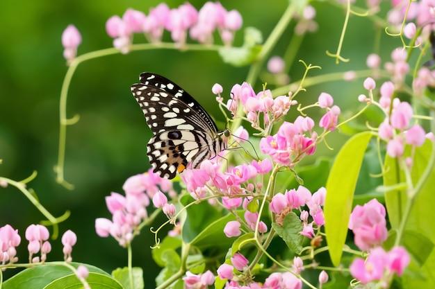 Borboleta com flor e sol