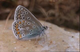 Borboleta, cor, borboletas, insetos, bichos