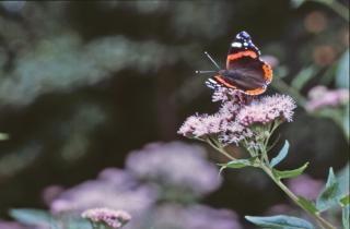 Borboleta, cor, insetos, bichos, borboleta