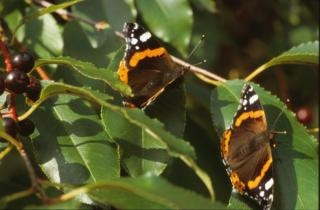 Borboleta, cores, bichos, borboleta, insetos