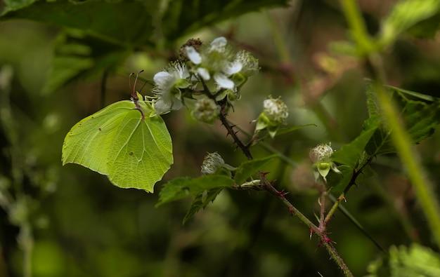Borboleta de folha verde em uma planta