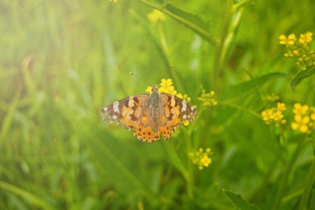 Borboleta de primavera em uma flor