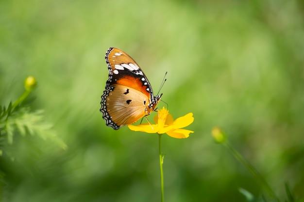 Borboleta e flor amarela