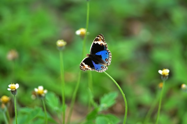 Borboleta em flor em um prado, em close-up de primavera de uma macro.