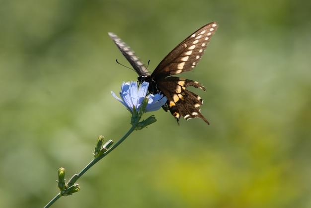 Borboleta em uma flor azul