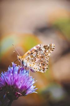 Borboleta em uma flor. foco seletivo. natureza.