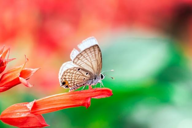 Borboleta em uma flor vermelha