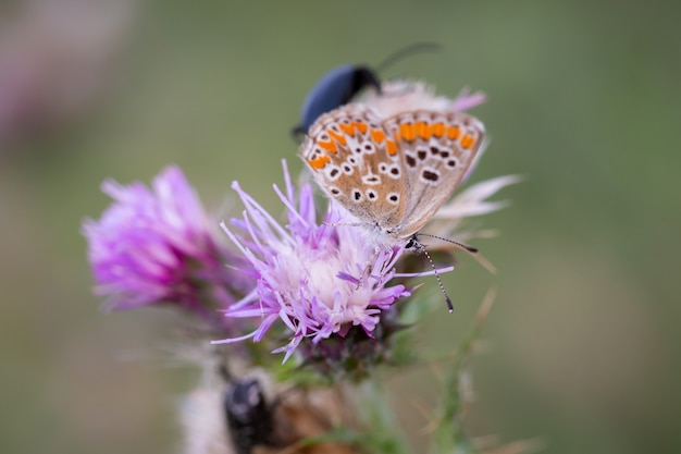 Borboleta fotografada em seu ambiente natural.