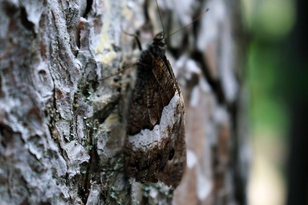 Borboleta na casca de uma árvore
