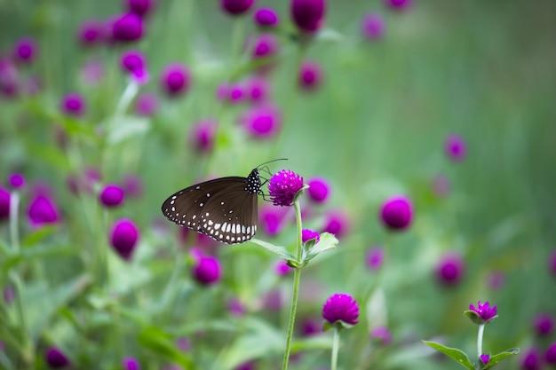 Borboleta na planta da flor