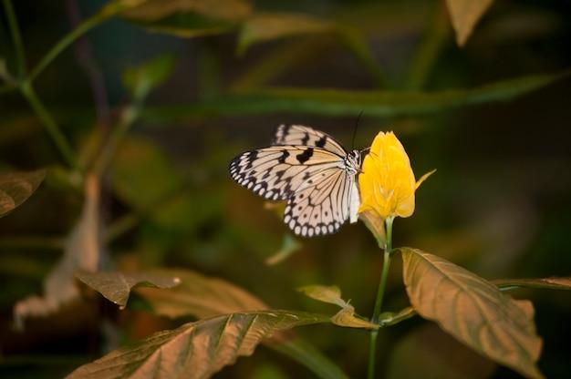 Borboleta no palácio das borboletas em branson, missouri