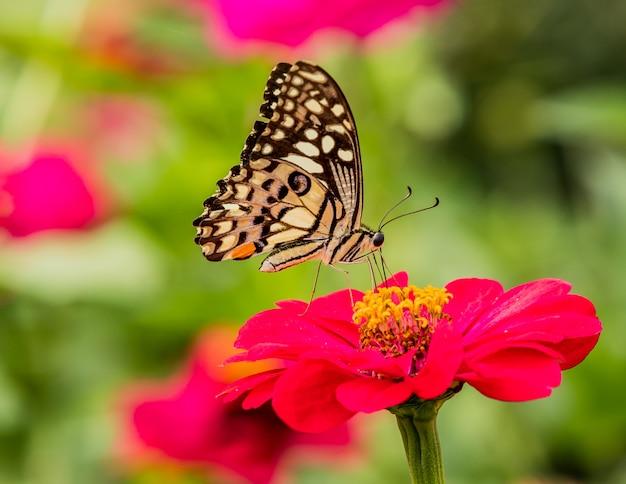 Borboleta pegou flores vermelhas na natureza