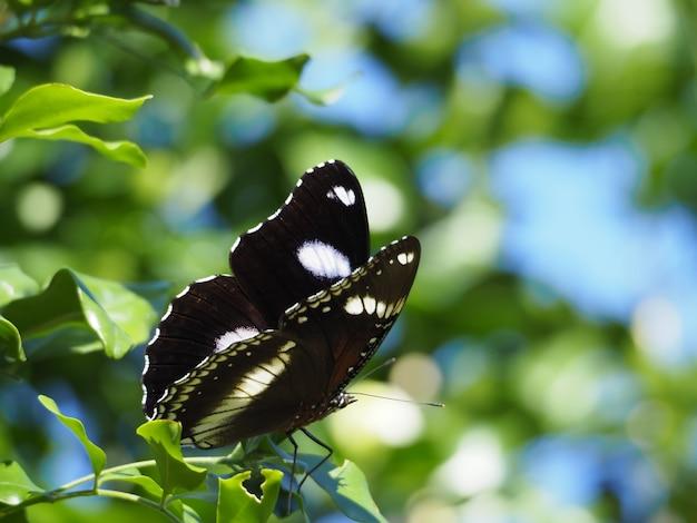 Borboleta preta e branca no galho de uma árvore