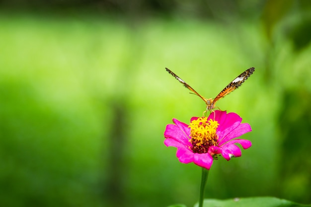 Borboleta sentado na flor.