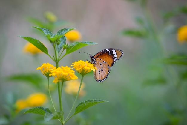 Borboleta tigre na planta de flor