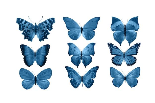 Borboletas azuis isoladas no fundo branco. mariposas tropicais. insetos para design. tintas aquarela