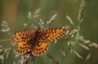 Borboletas, insetos, bichos, borboleta