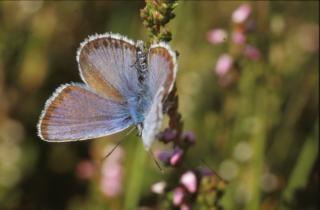 Borboletas, insetos, bichos, cores, borboleta