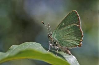 Borboletas, insetos, bichos, cores